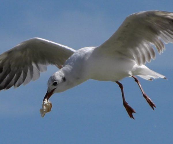 Le parc ornithologique de l'estuaire
